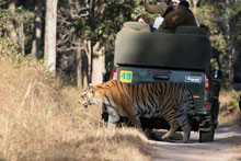 Tiger Safari India